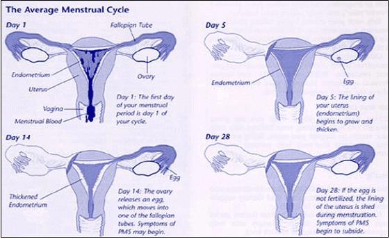 Premenstrual Syndrome symptoms